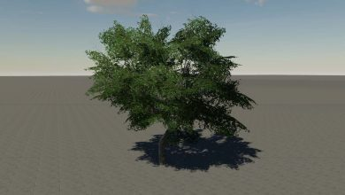Photo of Arbre